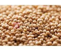 Imported Black Millet (Birds food) for sale