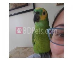 Adorable Parrots Of All Breeds For Sale At Cheap Price.