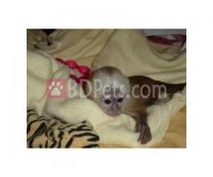 Adorable Baby Capuchin Squirrel And Marmoset Monkeys