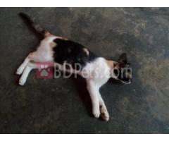 Colurefull male cat