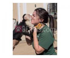 capuchin monkeys available for adoption
