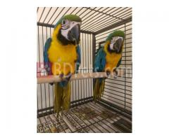 Blue And Gold Macaw Eggs
